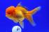 Uploaded image _DSC4553.jpg
