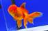 Uploaded image _DSC4704.jpg