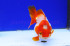 Uploaded image _DSC4852.jpg