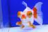 Uploaded image _DSC5048.jpg