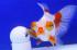 Uploaded image _DSC5052.jpg