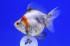 Uploaded image _DSC5194.jpg