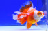 Uploaded image _DSC5269.jpg