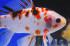 Uploaded image _DSC5440.jpg
