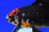 Uploaded image _DSC5480.jpg