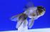 Uploaded image _DSC5731.jpg