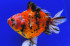 Uploaded image _DSC5743.jpg