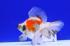 Uploaded image _DSC6008.jpg