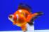 Uploaded image _DSC6052.jpg
