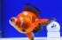 Uploaded image _DSC6054.jpg