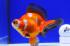Uploaded image _DSC6055.jpg