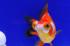 Uploaded image _DSC6082.jpg