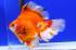 Uploaded image _DSC6262.jpg
