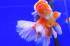Uploaded image _DSC6275.jpg