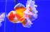 Uploaded image _DSC6276.jpg