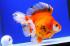 Uploaded image _DSC6427.jpg