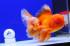 Uploaded image _DSC6436.jpg