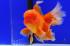 Uploaded image _DSC6445.jpg