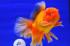 Uploaded image _DSC6450.jpg
