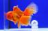 Uploaded image _DSC6458.jpg