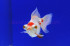 Uploaded image _DSC6600.jpg