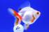 Uploaded image _DSC6628.jpg