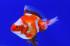 Uploaded image _DSC6684.jpg