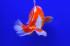 Uploaded image _DSC6698.jpg