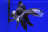 Uploaded image _DSC6747.jpg