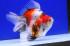 Uploaded image _DSC6836.jpg