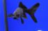 Uploaded image _DSC6936.jpg