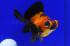 Uploaded image _DSC7103.jpg