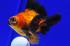 Uploaded image _DSC7106.jpg