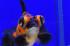 Uploaded image _DSC7118.jpg