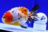 Uploaded image _DSC7206.jpg