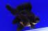 Uploaded image _DSC7221.jpg