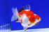 Uploaded image _DSC7387.jpg