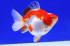 Uploaded image _DSC7389.jpg