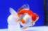 Uploaded image _DSC7392.jpg
