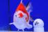Uploaded image _DSC7467.jpg