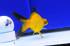 Uploaded image _DSC7559.jpg