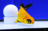 Uploaded image _DSC7566.jpg