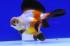 Uploaded image _DSC7644.jpg