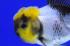 Uploaded image _DSC7718.jpg