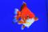 Uploaded image _DSC8145.jpg