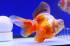 Uploaded image _DSC8484.jpg