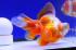 Uploaded image _DSC8485.jpg
