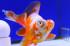 Uploaded image _DSC8486.jpg