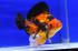 Uploaded image _DSC8862.jpg