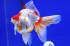 Uploaded image _DSC8958.jpg